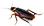:roach: