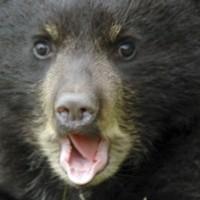Profile picture of FuzzyFatty